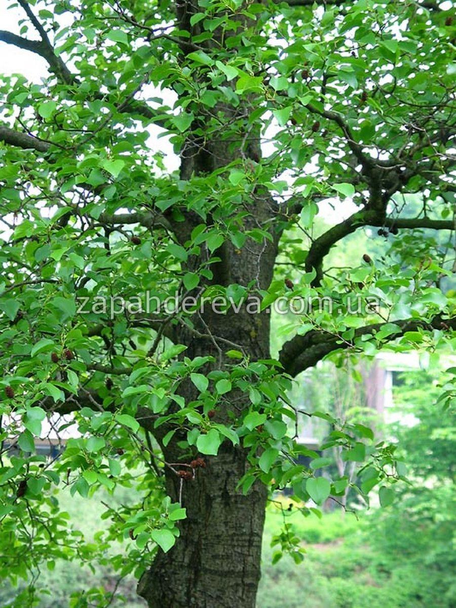 Красное Дерево Дрова Mp3